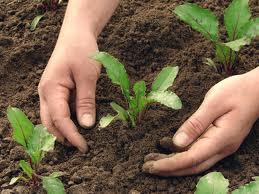 Cultiver son jardin: