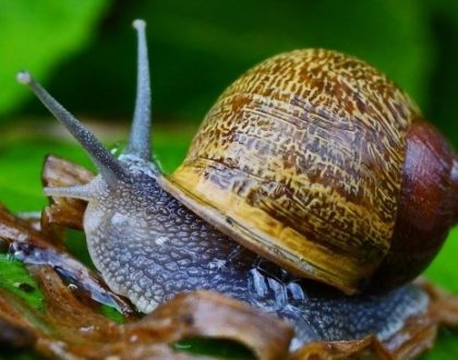 Le syndrome de l'escargot